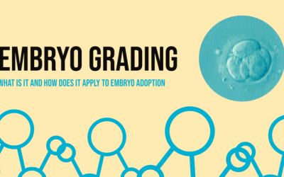Embryo Grading: What is it and How it Applies to Embryo Adoption